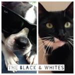 The Black & Whites
