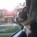 The Dog Bar – Charlotte, NC