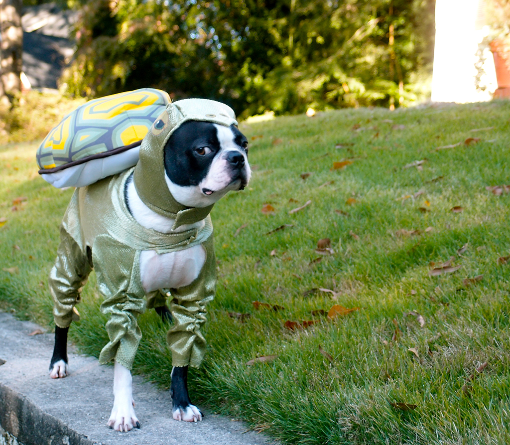Halloween 2013 turtle dog costume