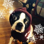 Let it snow, Let it snow! This Boston wants snow!