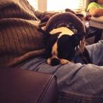 Basil's Travels on Bloglovin.com