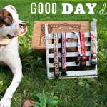Basils Favorite Things – LeLePets & Good Day Dog