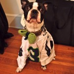 Basil's Favorite Things – The Seattle Seahawks!