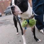Basil's party was a hoot! – Dog Bar, Charlotte