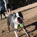 Sunny Weekend at the Dog Park!