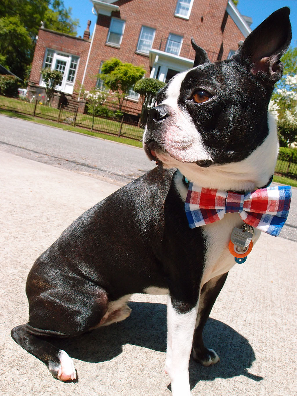 Basil loves bow ties!