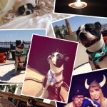 BlogPaws 2014! So far…