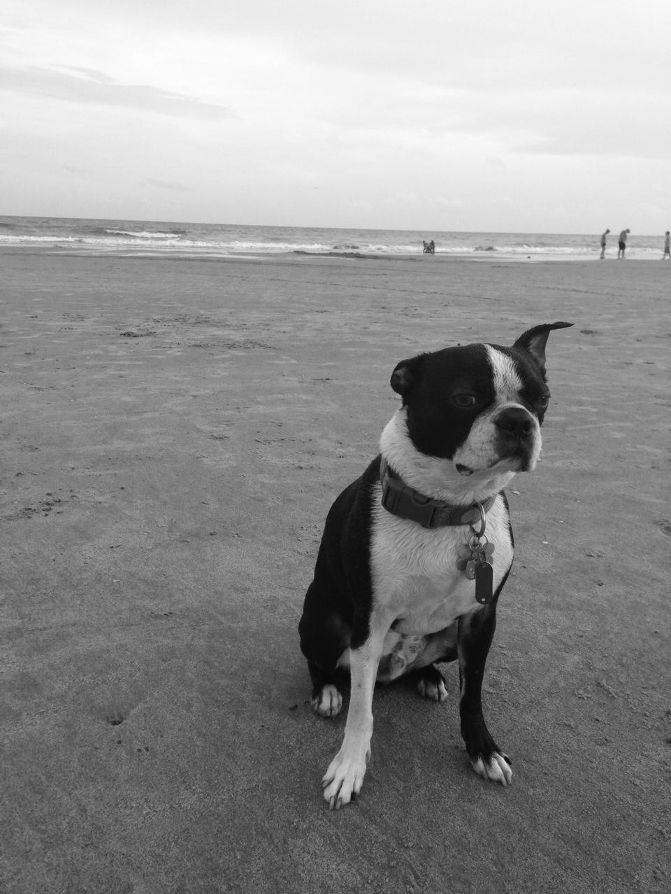 Basil b:w beach