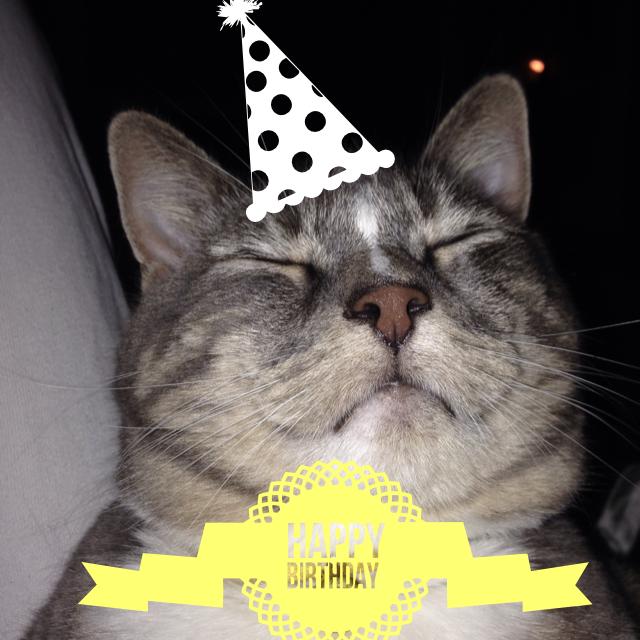 Happy Birthday Willow