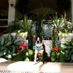 Wordless Wednesday — Resort Dog!