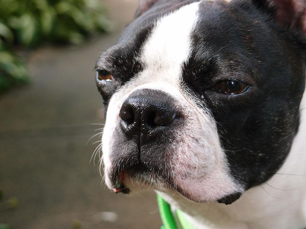 Serious Basil