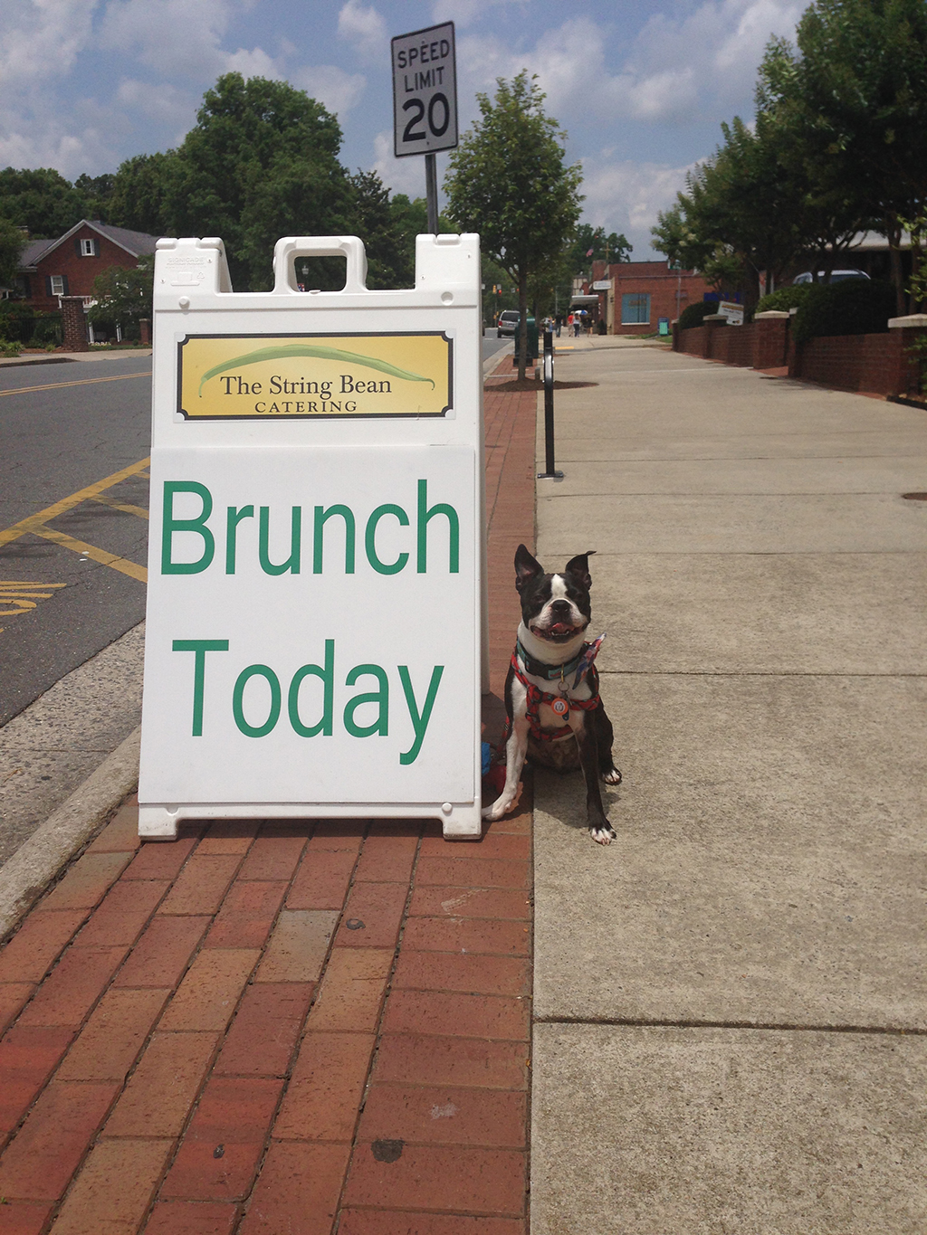 Brunch with Basil