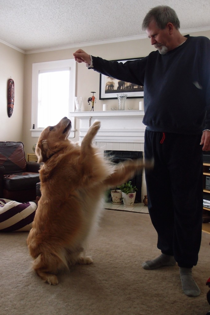 Giant dog does tricks for treats!
