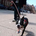 Philadelphia… The city of puppy love!