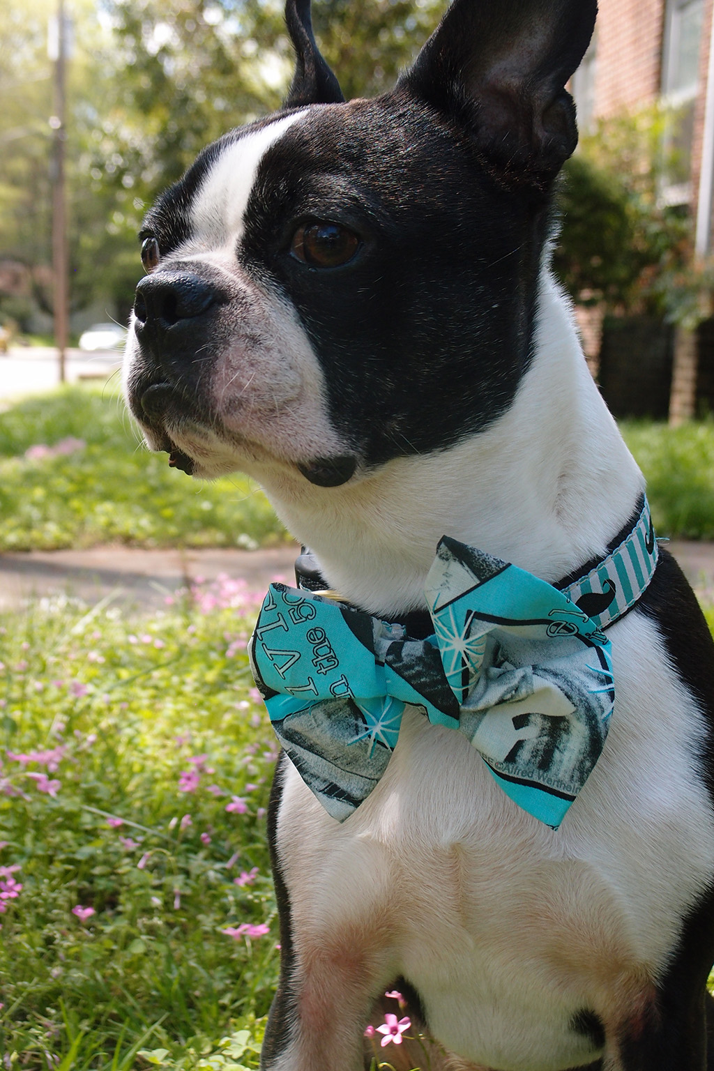 DIY No Sew Bow Tie Tutorial