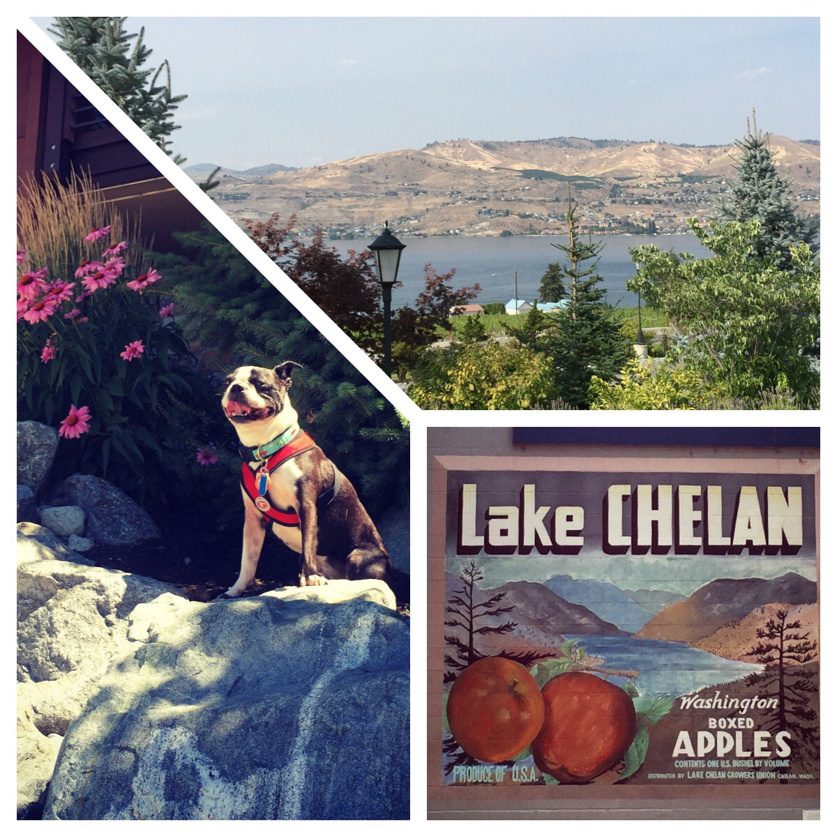 A Taste of Basil's time on Lake Chelan