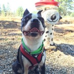 Basil favorite Pacific Northwest dog parks!