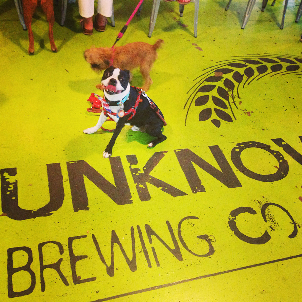 Dogs + Beer = Happy Humans