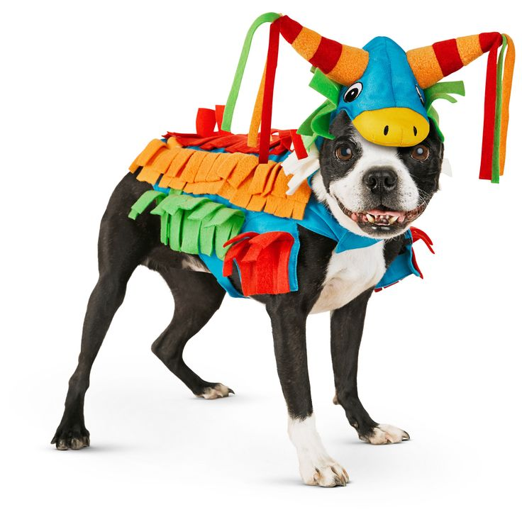 Piñata From Petco.com