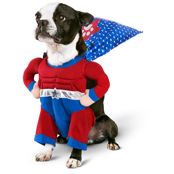 Super Hero by Petco.com