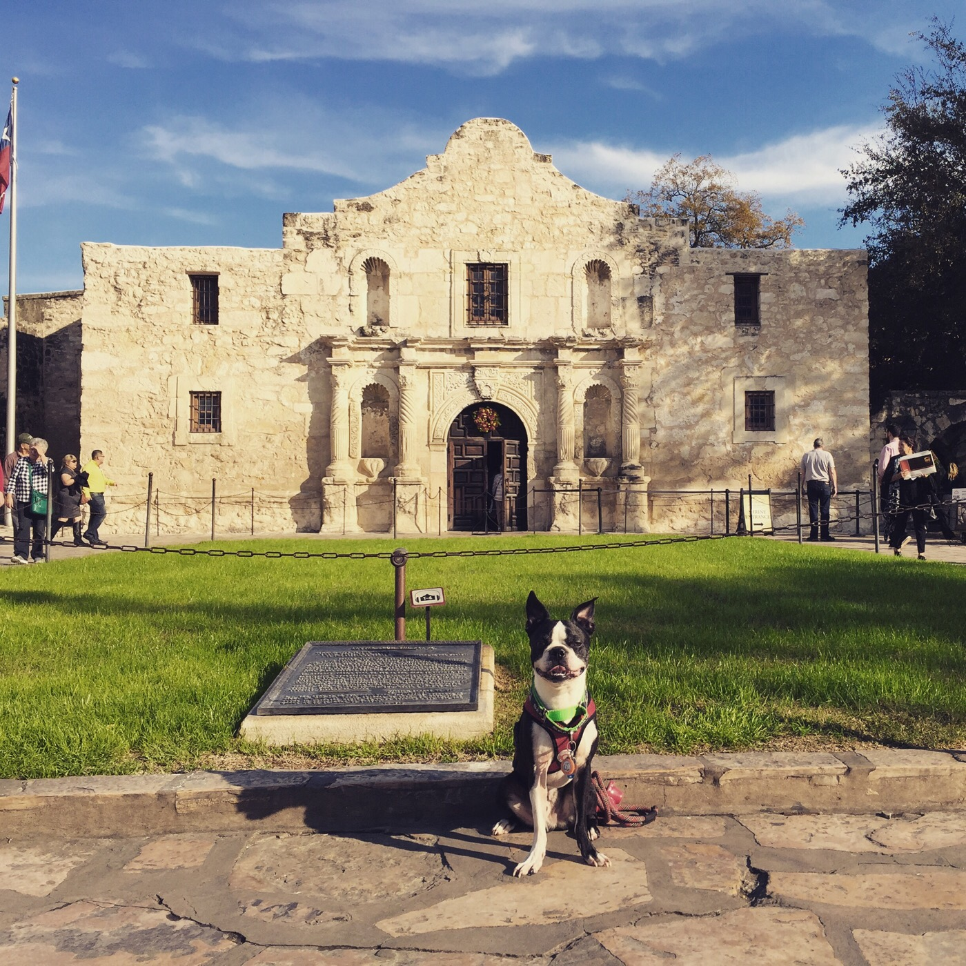 Basil takes The Alamo